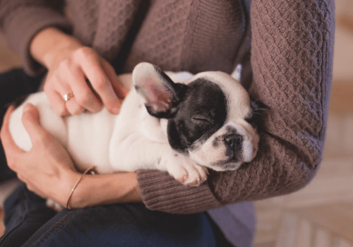 Als Tiersitter übernimmt man eine große Verantwortung für ein fremdes Tier