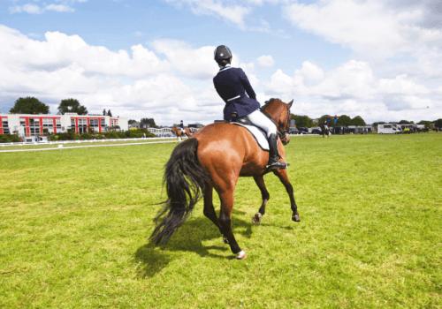 Bei der Reitbeteiligung hat man ähnliche Rechte und Pflichten wie der Besitzer des Pferdes