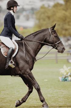 Beim englischen Reitstil machen Pferd und Reiter eine gute Figur