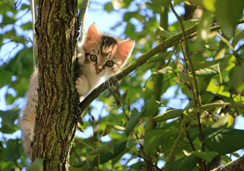 Der Katze muss ein sicherer Freigang ermöglicht werden