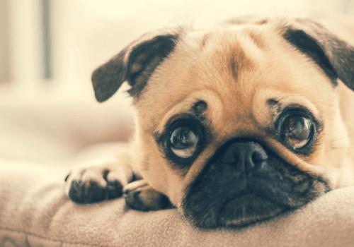 Die Haltung eines eigenen Haustieres ist leider nicht immer möglich