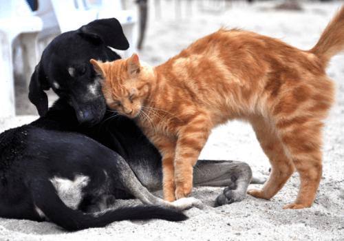 Haustiere haben für Menschen eine sehr wichtige Bedeutung