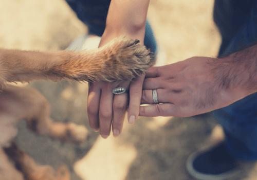 Der Hund als Freund und Partner des Menschen