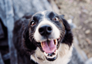 Hunde brauchen viel Zuwendung und Auslauf