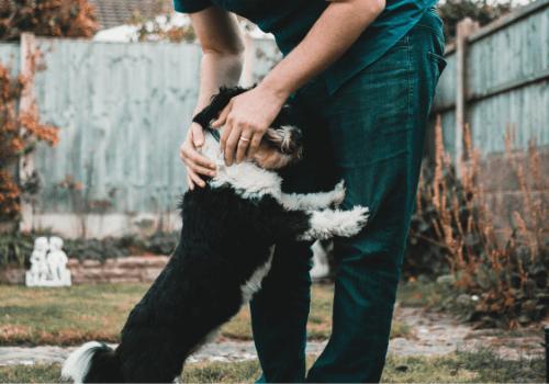 Hunde freuen sich sehr, wenn man mit ihnen Gassi geht
