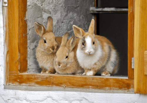 Kaninchen müssen unbedingt mit Artgenossen gehalten werden
