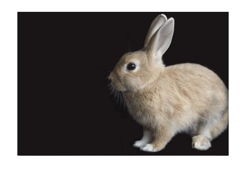 Kaninchen sind sehr sensible Tiere
