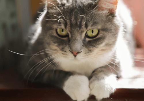 Katzen beobachten gerne ihre Umgebung
