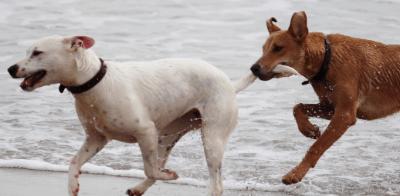 Hunde brauchen unbedingt sozialen Kontakt zu Artgenossen