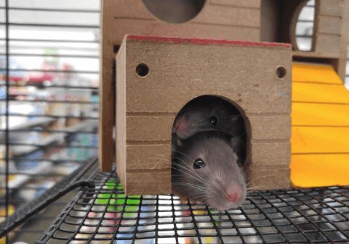 Mäuse sind von Natur aus sehr neugierig, weshalb das Gehege abwechslungsreich gestaltet sein muss
