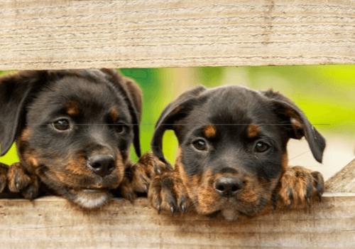 Mit der Haltung von Tieren übernimmt man eine große Verantwortung