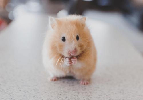 Hamster sind Lebewesen, mit denen verantwortungsvoll umgegangen werden muss