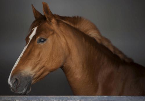 Pferde haben die Menschen schon immer fasziniert