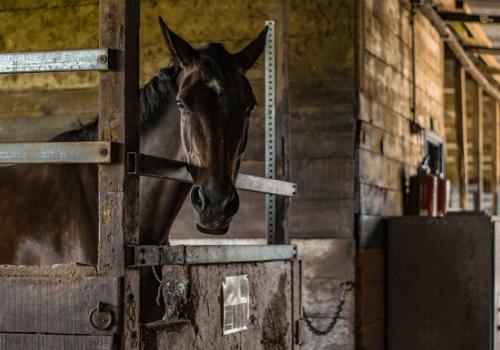 Pferde sind unser perfektes Spiegelbild