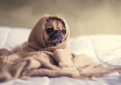 Die richtige Körperpflege beim Hund ist sehr wichtig für seine Gesundheit