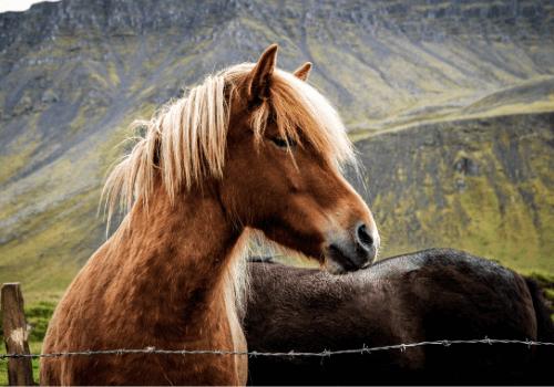 Ponys sind kleine und robuste Pferde
