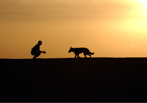 Tiere bereichern unser Leben enorm