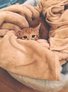 Viele Katzen müssen wegen ihrer schlechten Erfahrungen das Zutrauen zu Menschen erst wieder lernen