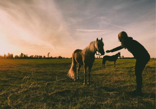 Von einem Pflegepferd lernt man viel über das Verhalten und den Umgang mit Pferden